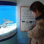 Foto van Tokai University Marine Science Museum