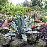 intersting plants