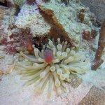 Photo of Hispaniola Aquatic Adventures