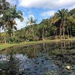 Lago Jd Botanico