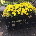 Flower Pot at the entrance