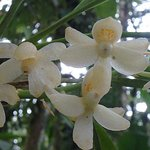 The Orchid Trail
