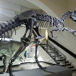 """Photo of Museo di Scienze Naturali """"E. Caffi"""""""