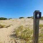 Φωτογραφία: Tracks in the Sand