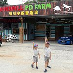 Top Attractions in Port Dickson-Windmill Port Dickson Farm 4 in 1 . Petting zoo , cat house, ant