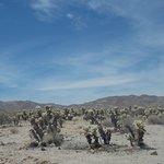 Cholla Cactus Garden, Joshua Tree National Park, California. Ever more Cholla Cacti.
