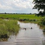 Children swimming along the bamboo train railtracks