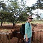 The rhino enclosure