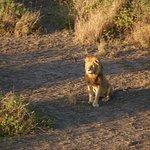 Ballonsafaris in der Serengeti Foto