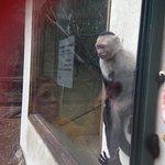 Photo of Zoo Bassin d'Arcachon
