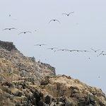 Su habitantes naturales, las aves guaneras