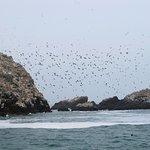 Grandes bandas de aves acuaticas