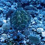 Photo of Moorea Fun Dive