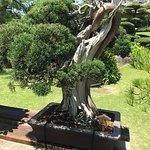 Bonsai at Chinzanso - over 300 years old.