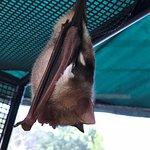 Foto van The Bat Hospital Visitor Centre