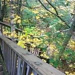 Zdjęcie Judge C.R. Magney State Park
