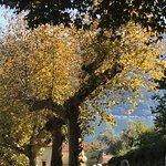Photo of Trattoria del Santuario