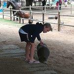 Flag Animal Farm의 사진