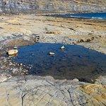 Kimmeridge Bay rock pool