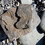 Ancient fossils at Kimmeridge Bay