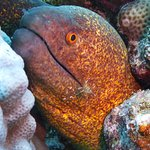 Foto de Orca Dive Club El Gouna - Abu Tig Marina
