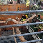 Toucan out back
