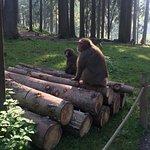 Abenteuer Affenberg tt. Foto