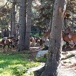 Foto van Parc animalier des Angles