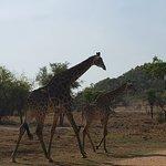 Photo of Lion and Safari Park