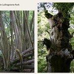 Trees upper Beechen wood