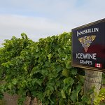 Inniskillin Wines at the Brae Burn Estate의 사진