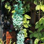 Bingil Bay Cafe Foto