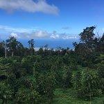 Photo of Mountain Thunder Coffee Plantation