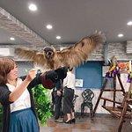 Фотография Owlpark Owl Cafe Ikebukuro