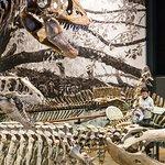 Dinosaurs roam the main hall of the Utah Natural History Museum.