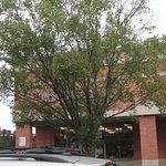 Tree crown blocking signage........