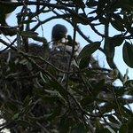 wildlife on the bush walk to Haruru Falls