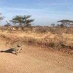 Zdjęcie Tazama Africa Holidays