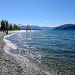 Distant View of Wanaka Tree, with Photographers on the Beach