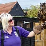 Falconer with Eagle owl