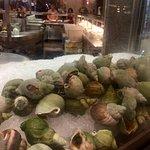 Sea Snails?