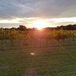 Фотография Staller Estate Winery