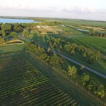Foto van Round Lake Vineyards & Winery