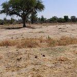 ภาพถ่ายของ Otjitotongwe Cheetah Park