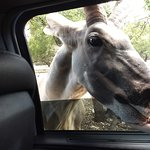 They are not shy about putting their mouths in the car windows to receive their goodies!!