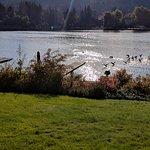 Ducks flying in