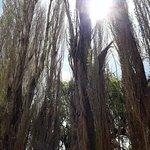 Foto di Parque Nacional El Leoncito