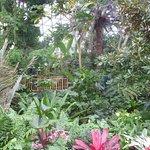 Bild från Bloedel Conservatory