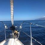 Bild från Mola Mola Tenerife Sailing
