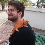 "Volunteer outside ""sunbathing"" the bearded dragon"